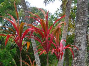 Luscious gardens at Ariana