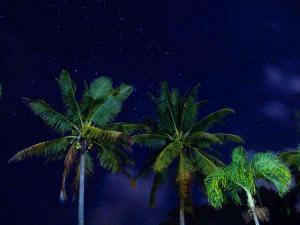 Palm Trees in the night sky